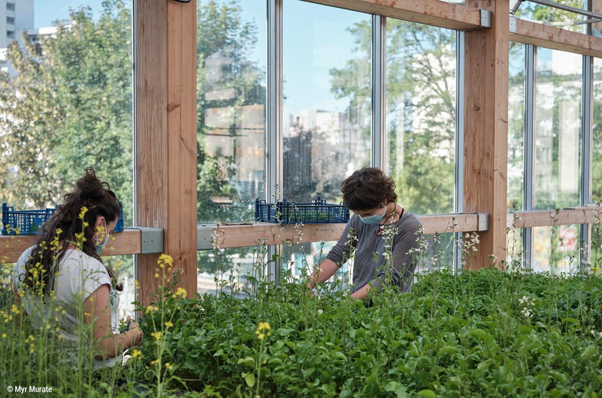 ferme du rail paris bâtiment agricole en bois structure bois bâtiment bioclimatique